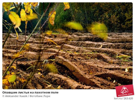Опавшие листья на пахотном поле, фото № 263620, снято 25 июня 2017 г. (c) Aleksander Kaasik / Фотобанк Лори