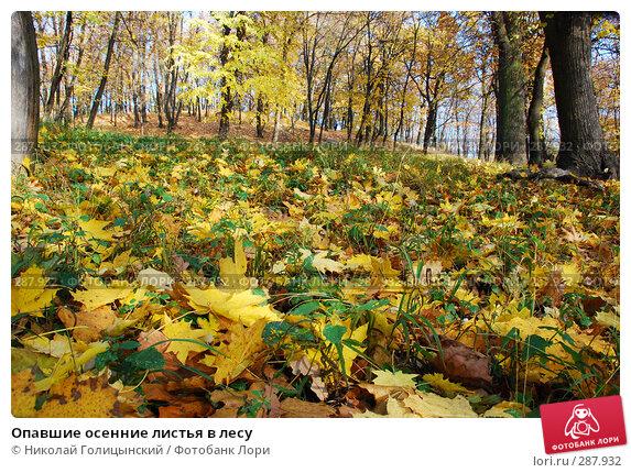 Опавшие осенние листья в лесу, фото № 287932, снято 26 октября 2007 г. (c) Николай Голицынский / Фотобанк Лори