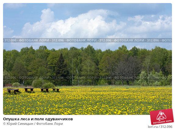 Опушка леса и поле одуванчиков, фото № 312096, снято 18 мая 2008 г. (c) Юрий Синицын / Фотобанк Лори