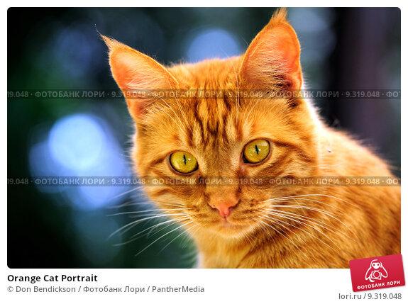Orange tiger kitten names