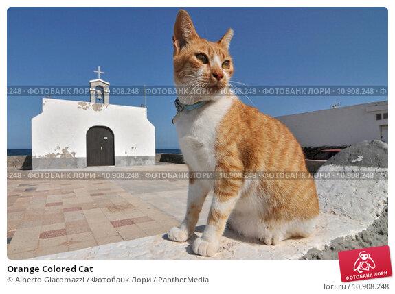 Купить «Orange Colored Cat», фото № 10908248, снято 22 сентября 2019 г. (c) PantherMedia / Фотобанк Лори