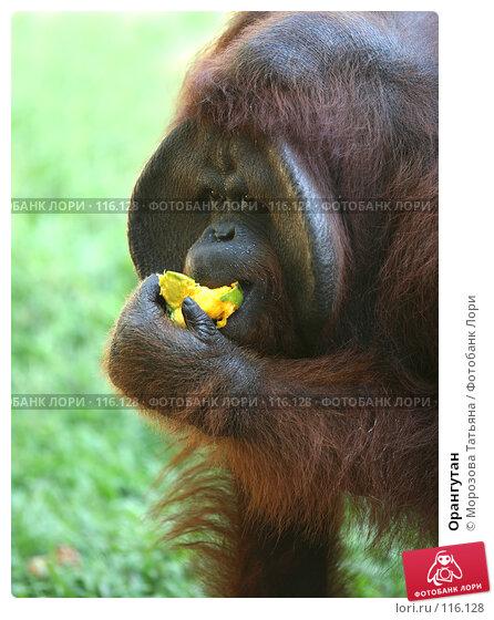 Орангутан, фото № 116128, снято 23 октября 2007 г. (c) Морозова Татьяна / Фотобанк Лори