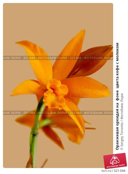 Оранжевая орхидея на  фоне  цвета кофе с молоком, фото № 321044, снято 6 мая 2008 г. (c) Sergey Toronto / Фотобанк Лори