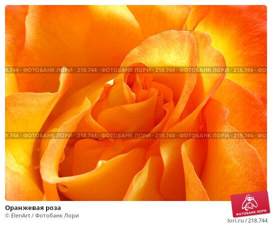 Оранжевая роза, фото № 218744, снято 26 февраля 2017 г. (c) ElenArt / Фотобанк Лори