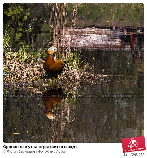 Оранжевая утка отражается в воде, фото № 298272, снято 24 апреля 2008 г. (c) Лилия Барладян / Фотобанк Лори