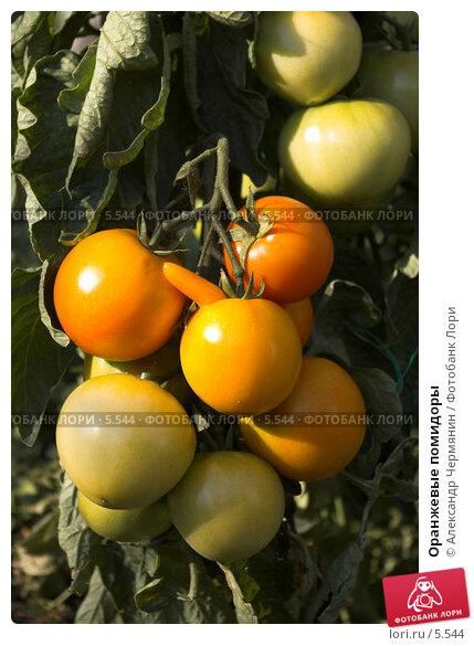 Оранжевые помидоры, фото № 5544, снято 17 июля 2006 г. (c) Александр Чермянин / Фотобанк Лори