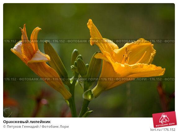 Оранжевый лилейник, фото № 176152, снято 24 июля 2007 г. (c) Петухов Геннадий / Фотобанк Лори