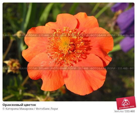 Купить «Оранжевый цветок», фото № 333460, снято 21 июня 2008 г. (c) Катерина Макарова / Фотобанк Лори