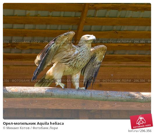 Орел-могильник Aquila heliaca, фото № 296356, снято 13 мая 2008 г. (c) Михаил Котов / Фотобанк Лори