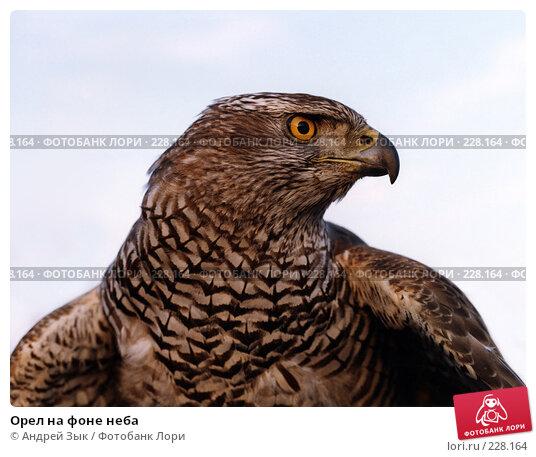 Орел на фоне неба, фото № 228164, снято 23 августа 2017 г. (c) Андрей Зык / Фотобанк Лори