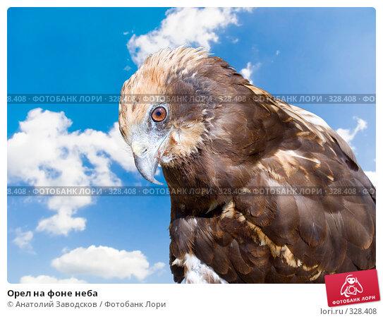 Орел на фоне неба, фото № 328408, снято 30 мая 2006 г. (c) Анатолий Заводсков / Фотобанк Лори