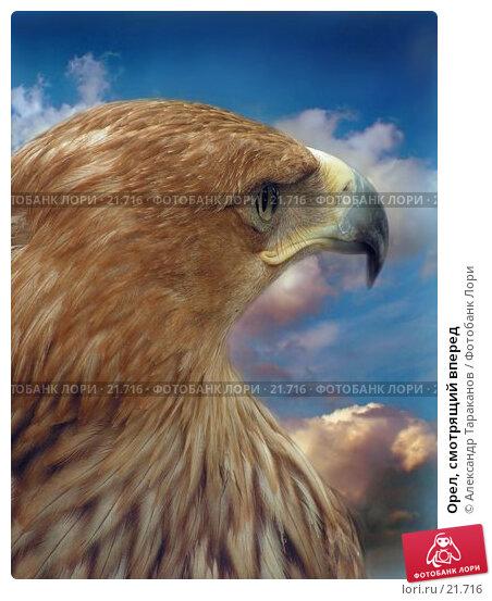 Купить «Орел, смотрящий вперед», фото № 21716, снято 26 апреля 2018 г. (c) Александр Тараканов / Фотобанк Лори
