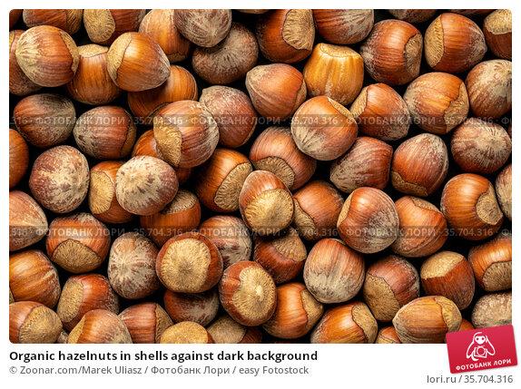 Organic hazelnuts in shells against dark background. Стоковое фото, фотограф Zoonar.com/Marek Uliasz / easy Fotostock / Фотобанк Лори