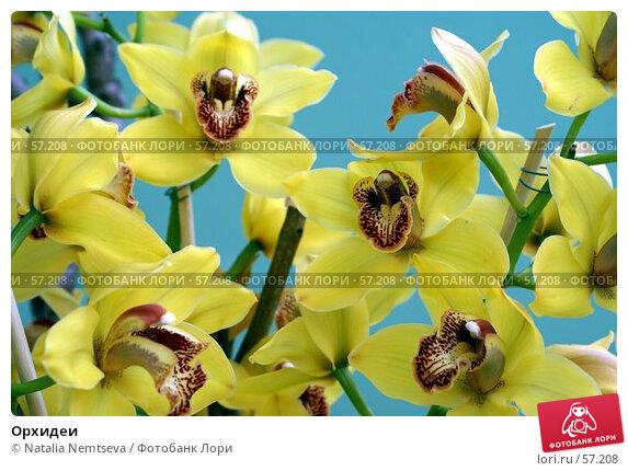 Орхидеи, эксклюзивное фото № 57208, снято 7 апреля 2007 г. (c) Natalia Nemtseva / Фотобанк Лори