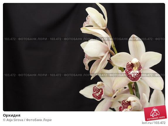 Купить «Орхидея», фото № 103472, снято 19 марта 2018 г. (c) Asja Sirova / Фотобанк Лори