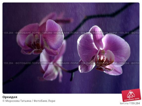 Орхидея, фото № 159284, снято 16 марта 2006 г. (c) Морозова Татьяна / Фотобанк Лори