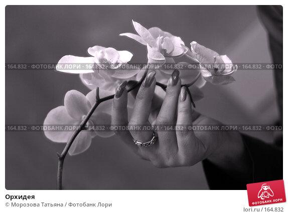 Купить «Орхидея», фото № 164832, снято 19 марта 2018 г. (c) Морозова Татьяна / Фотобанк Лори