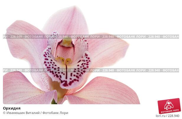 Купить «Орхидея», фото № 228940, снято 24 апреля 2018 г. (c) Иванюшин Виталий / Фотобанк Лори