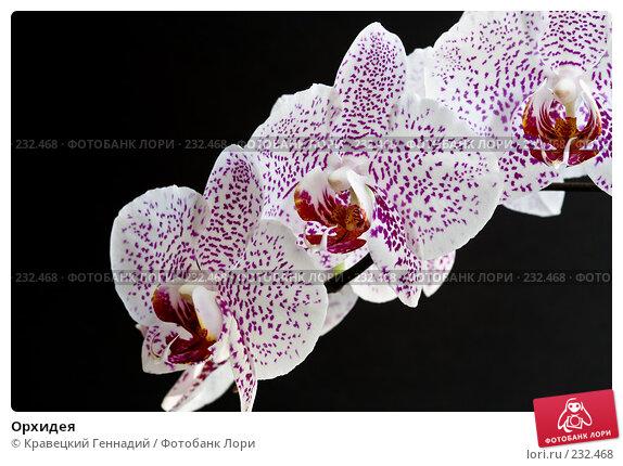 Купить «Орхидея», фото № 232468, снято 11 января 2006 г. (c) Кравецкий Геннадий / Фотобанк Лори