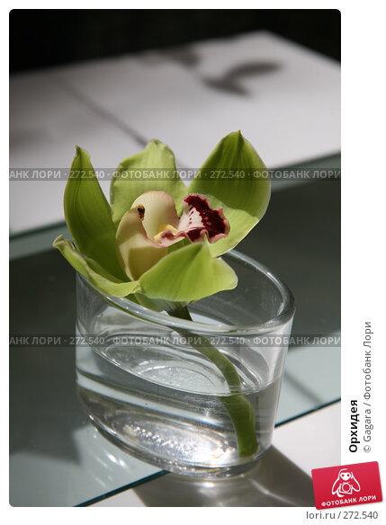 Орхидея, фото № 272540, снято 8 марта 2008 г. (c) Gagara / Фотобанк Лори