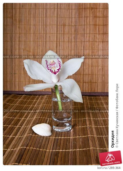 Орхидея, фото № 289364, снято 27 июля 2017 г. (c) Светлана Кучинская / Фотобанк Лори