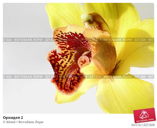 Орхидея 2, фото № 227024, снято 11 марта 2008 г. (c) ikheid / Фотобанк Лори