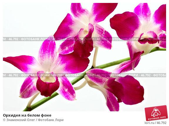 Орхидея на белом фоне, эксклюзивное фото № 46792, снято 28 января 2007 г. (c) Знаменский Олег / Фотобанк Лори