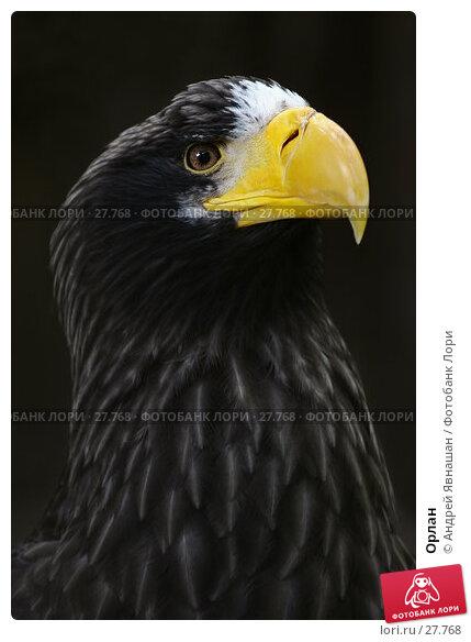 Купить «Орлан», фото № 27768, снято 19 июня 2006 г. (c) Андрей Явнашан / Фотобанк Лори