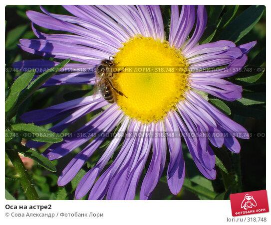 Оса на астре2, фото № 318748, снято 2 сентября 2007 г. (c) Сова Александр / Фотобанк Лори