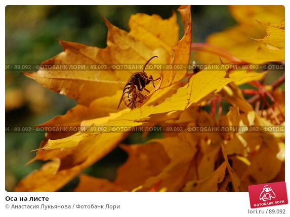 Оса на листе, фото № 89092, снято 21 сентября 2007 г. (c) Анастасия Лукьянова / Фотобанк Лори