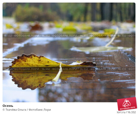 Осень, фото № 16332, снято 21 октября 2004 г. (c) Ткачёва Ольга / Фотобанк Лори