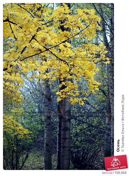 Осень, фото № 109004, снято 19 октября 2007 г. (c) Ткачёва Ольга / Фотобанк Лори