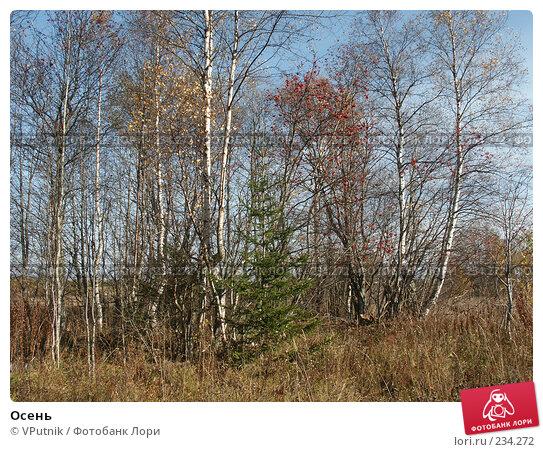 Осень, фото № 234272, снято 10 октября 2005 г. (c) VPutnik / Фотобанк Лори