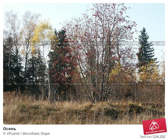 Осень, фото № 234292, снято 12 октября 2005 г. (c) VPutnik / Фотобанк Лори