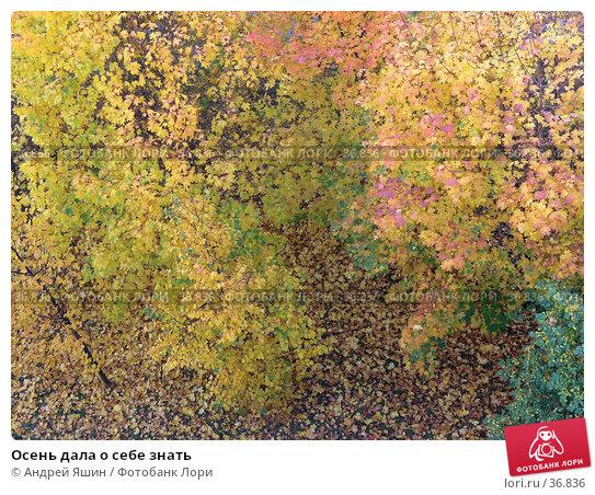 Осень дала о себе знать, фото № 36836, снято 2 октября 2005 г. (c) Андрей Яшин / Фотобанк Лори