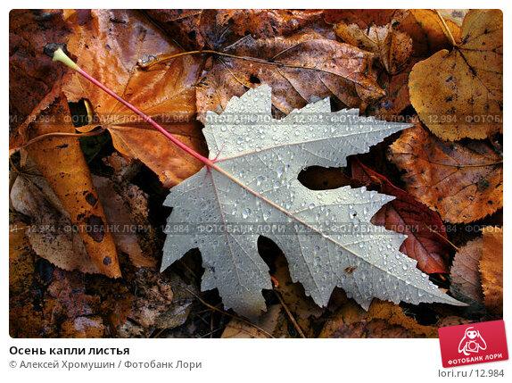 Осень капли листья, фото № 12984, снято 20 октября 2005 г. (c) Алексей Хромушин / Фотобанк Лори