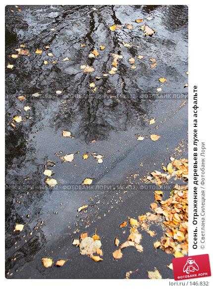 Осень. Отражение деревьев в луже на асфальте, фото № 146832, снято 5 октября 2007 г. (c) Светлана Силецкая / Фотобанк Лори