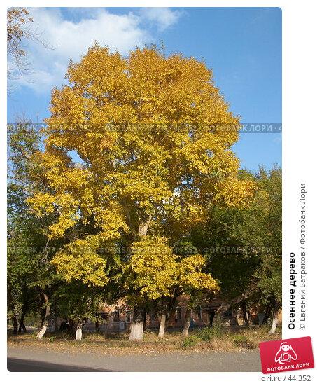 Осеннее дерево, фото № 44352, снято 29 сентября 2003 г. (c) Евгений Батраков / Фотобанк Лори