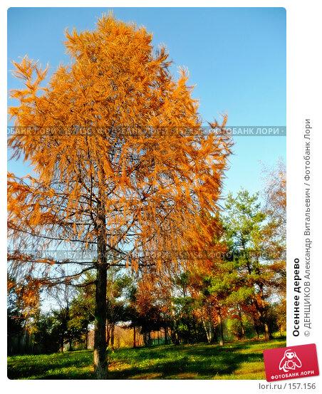 Осеннее дерево, фото № 157156, снято 27 октября 2007 г. (c) ДЕНЩИКОВ Александр Витальевич / Фотобанк Лори