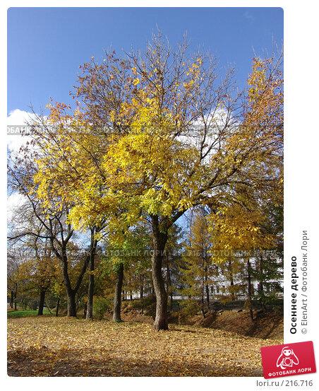 Осеннее дерево, фото № 216716, снято 29 апреля 2017 г. (c) ElenArt / Фотобанк Лори