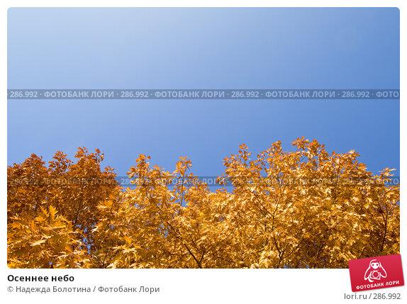 Купить «Осеннее небо», фото № 286992, снято 27 октября 2007 г. (c) Надежда Болотина / Фотобанк Лори