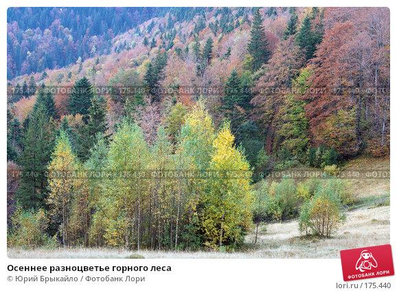 Купить «Осеннее разноцветье горного леса», фото № 175440, снято 5 октября 2007 г. (c) Юрий Брыкайло / Фотобанк Лори