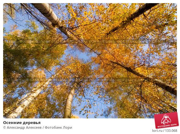 Осенние деревья, эксклюзивное фото № 133068, снято 30 сентября 2007 г. (c) Александр Алексеев / Фотобанк Лори