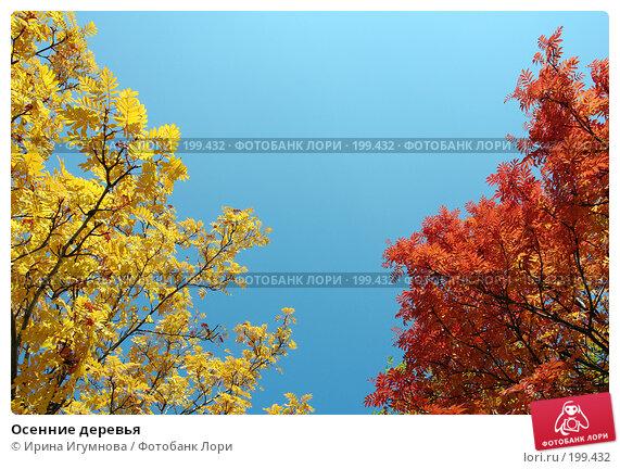Осенние деревья, фото № 199432, снято 7 октября 2007 г. (c) Ирина Игумнова / Фотобанк Лори