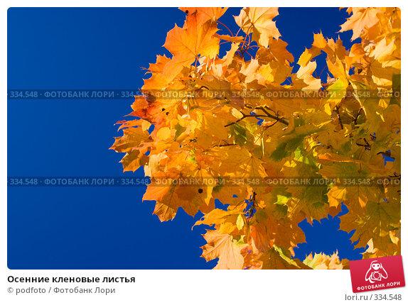 Осенние кленовые листья, фото № 334548, снято 25 сентября 2007 г. (c) podfoto / Фотобанк Лори