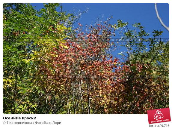 Осенние краски, фото № 9716, снято 23 сентября 2006 г. (c) Т.Кожевникова / Фотобанк Лори