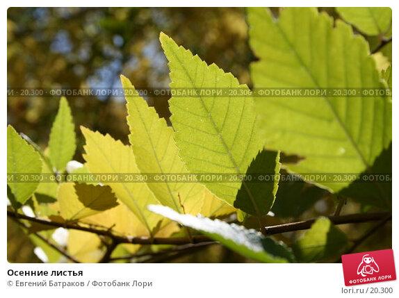 Осенние листья, фото № 20300, снято 25 сентября 2006 г. (c) Евгений Батраков / Фотобанк Лори