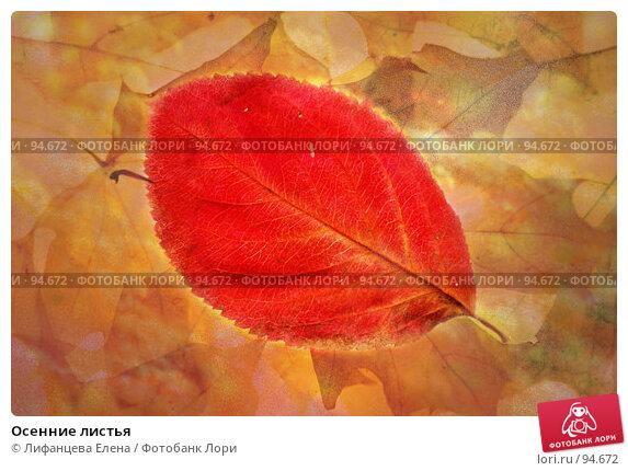 Осенние листья, фото № 94672, снято 6 октября 2007 г. (c) Лифанцева Елена / Фотобанк Лори