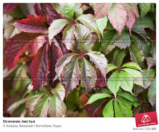 Купить «Осенние листья», фото № 123480, снято 17 сентября 2006 г. (c) Коваль Василий / Фотобанк Лори