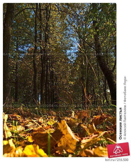 Осенние листья, фото № 216500, снято 27 сентября 2007 г. (c) Алексей Пантелеев / Фотобанк Лори